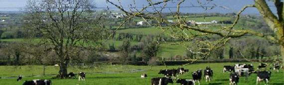 SBCI Agriculture Cashflow Support Loan Scheme
